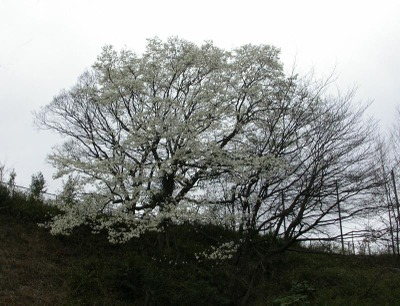 M_322
